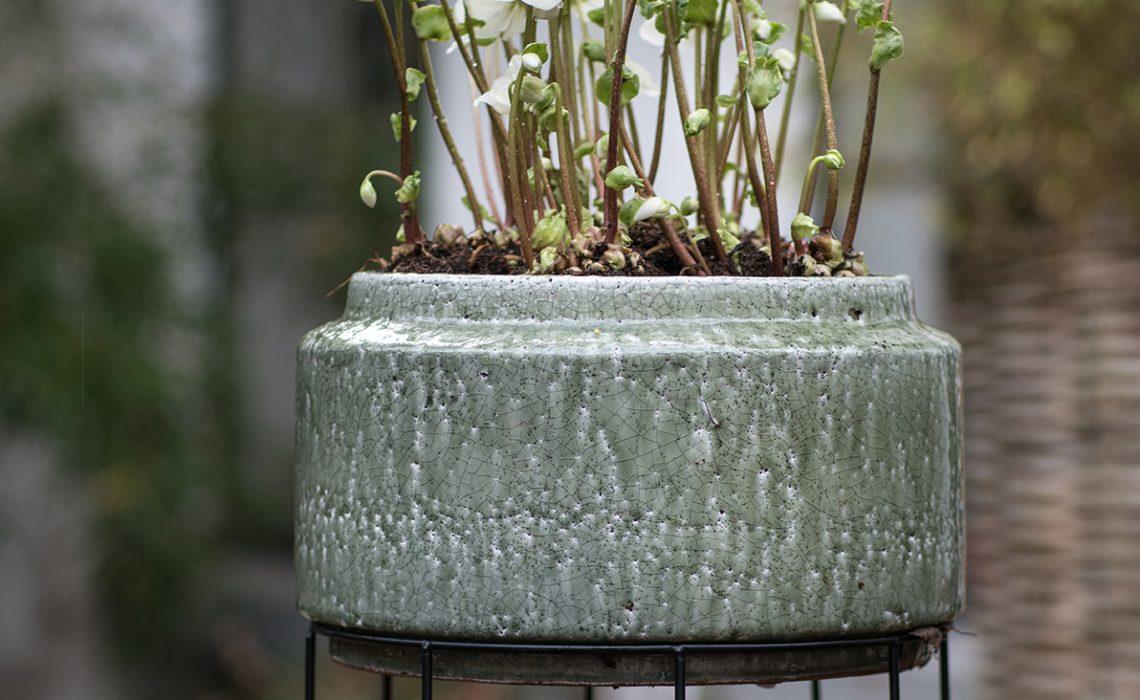 Winterplanten voor een stijlvol gekleurde wintertuin