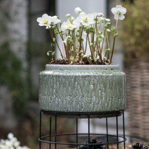 Planten voor een stijlvol gekleurde wintertuin