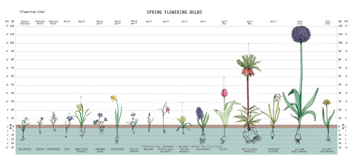 bloembollen planten-2
