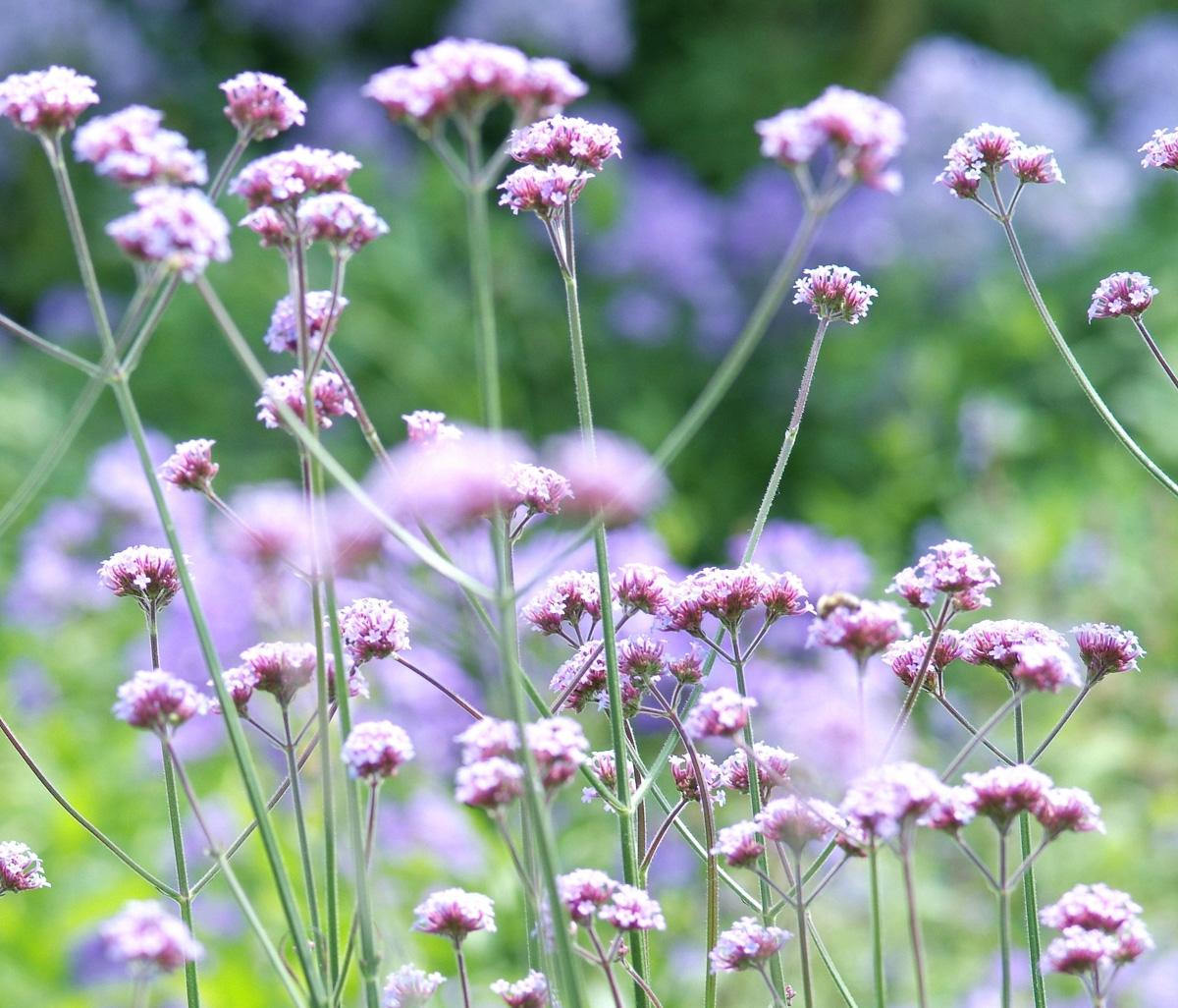 weefplanten